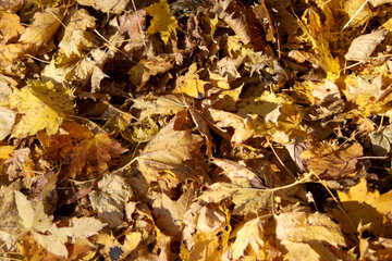 Texture of autumn leaves №18614