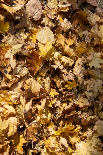 Texture of fallen leaves №18615