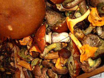 Mushroom Medley №18053