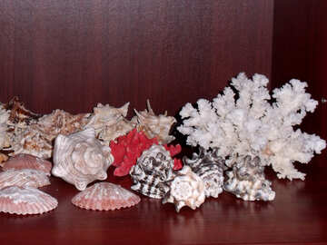 Collection of seashells