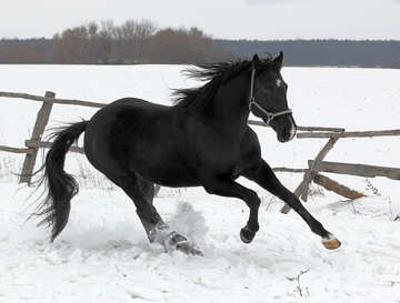 Horse in the snow №18194