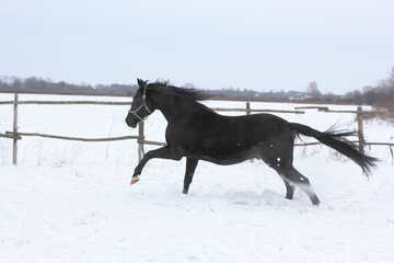 Horse running in the snow №18196