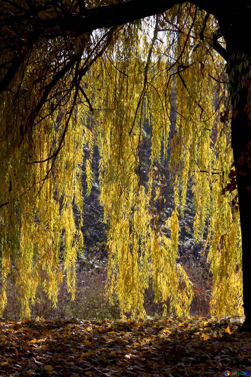 Natural curtains №18612
