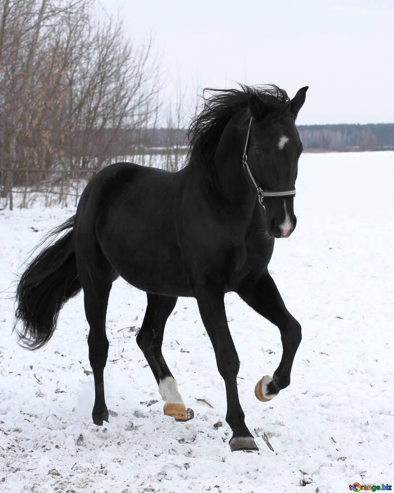 Horse in winter №18197