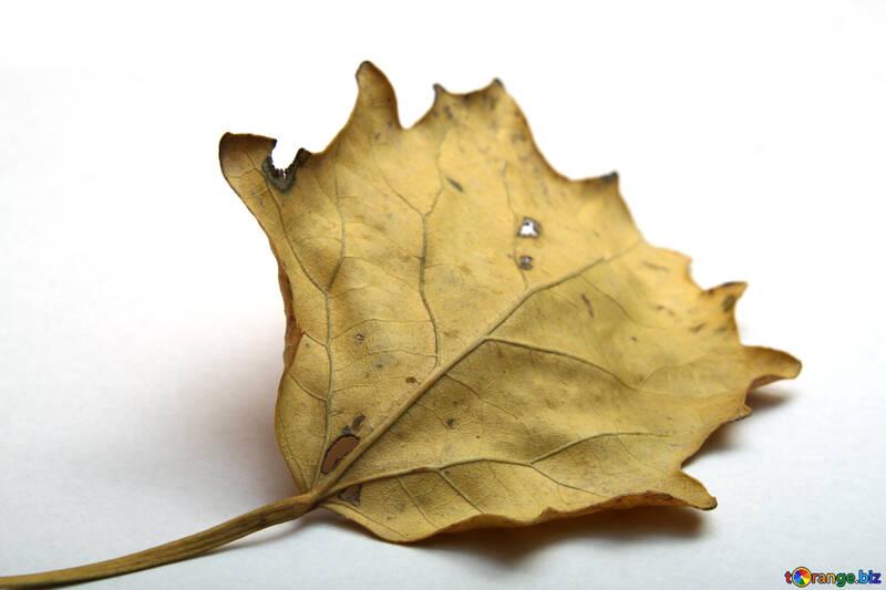 Autumn leaf №18028