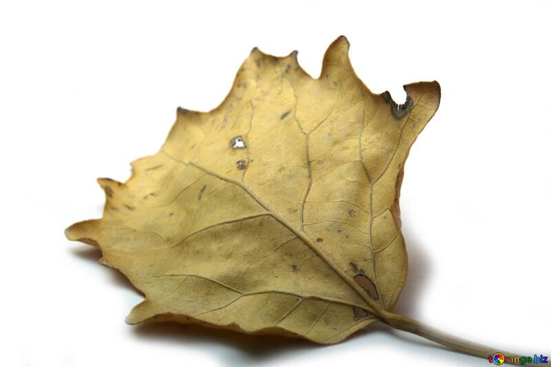 Dry leaves №18027