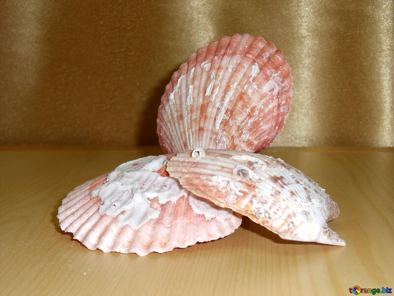 Pearl shell №18143