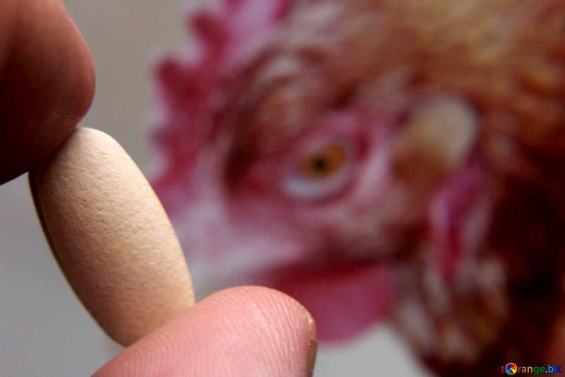 Avian influenza №18804