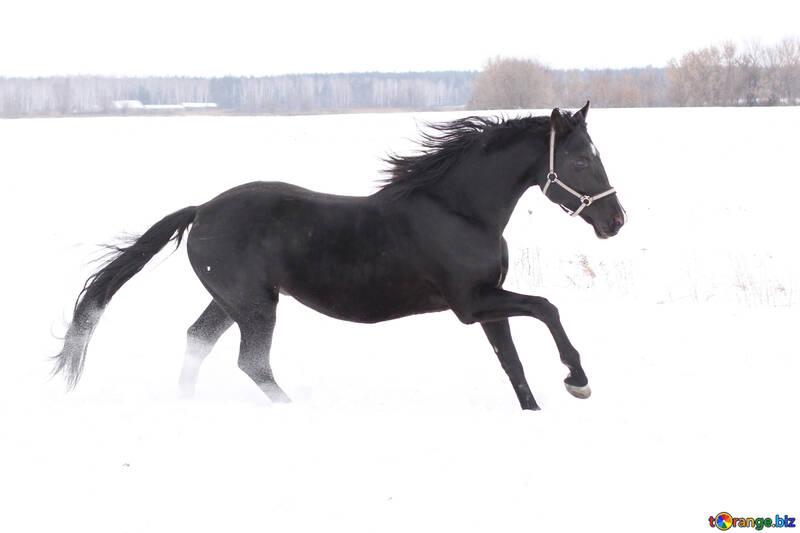 Лошадь и снег №18190