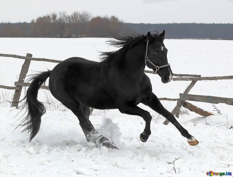 Лошадь в снег №18194