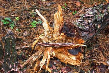 Fallen Tree №19059