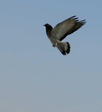 Bird in flight №19807