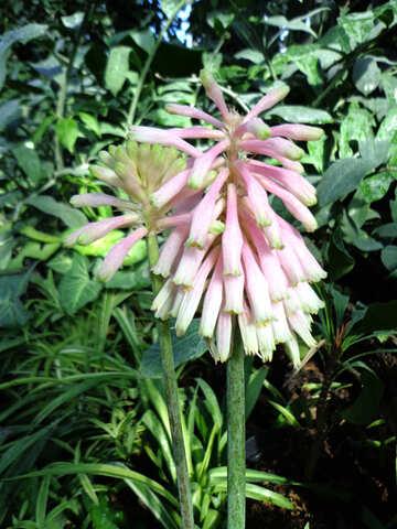 Exotic Flower №19505
