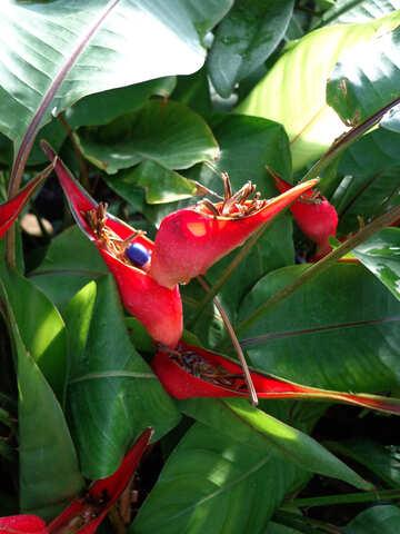 Exotic Flower №19506