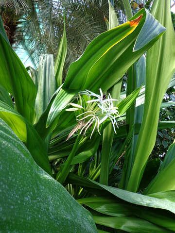Tropical flower №19486