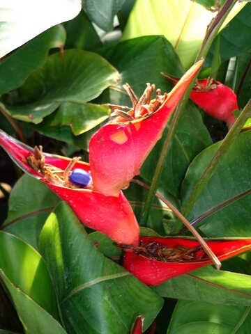 Tropical flower №19507