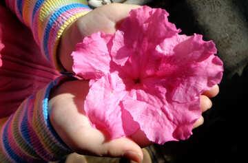 Flower in hand №19433