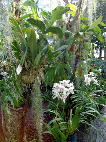 Garden with orchids №19522