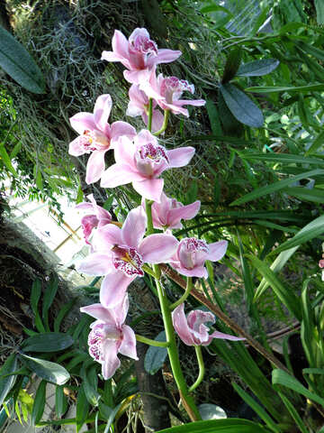 Branch orchid №19534