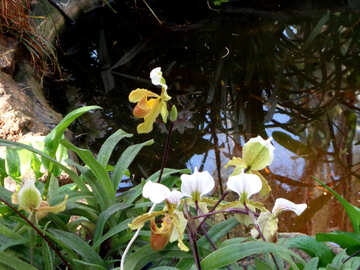 Pond and orchid №19518