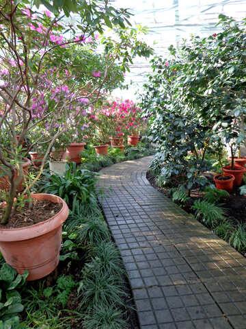 Winter Garden №19438