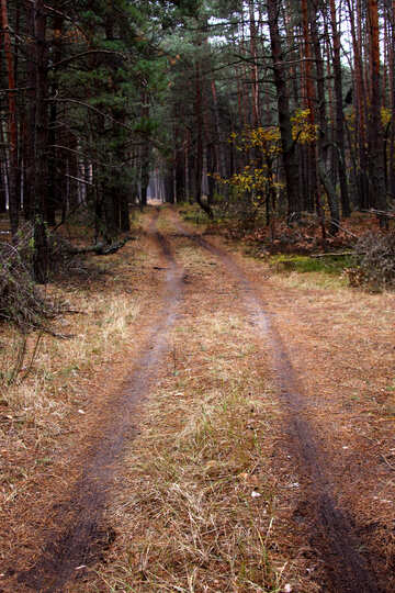 The road through the forest №19087