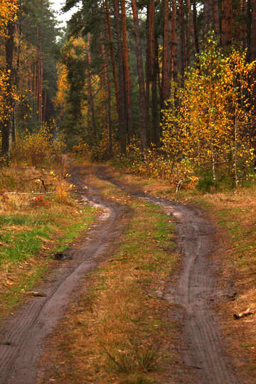The road in the woods №19040