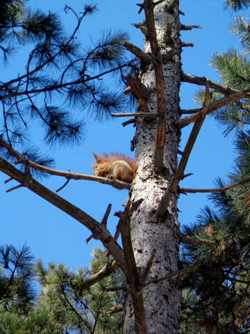Squirrel on tree №19462