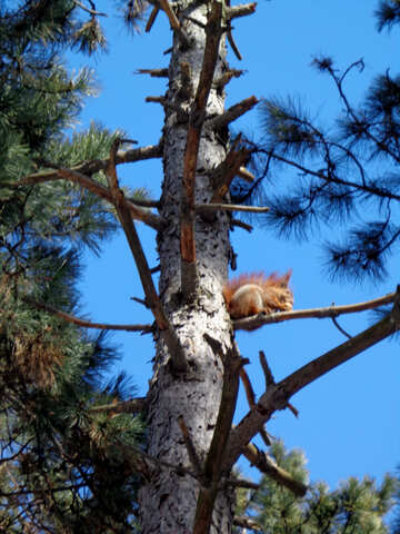 Squirrel sits on tree branch №19463