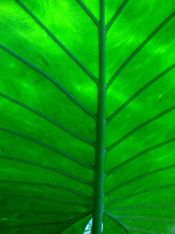 Leaf texture №19488