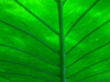 Plant leaf texture №19489