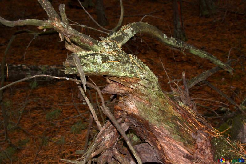 Twisted tree №19071