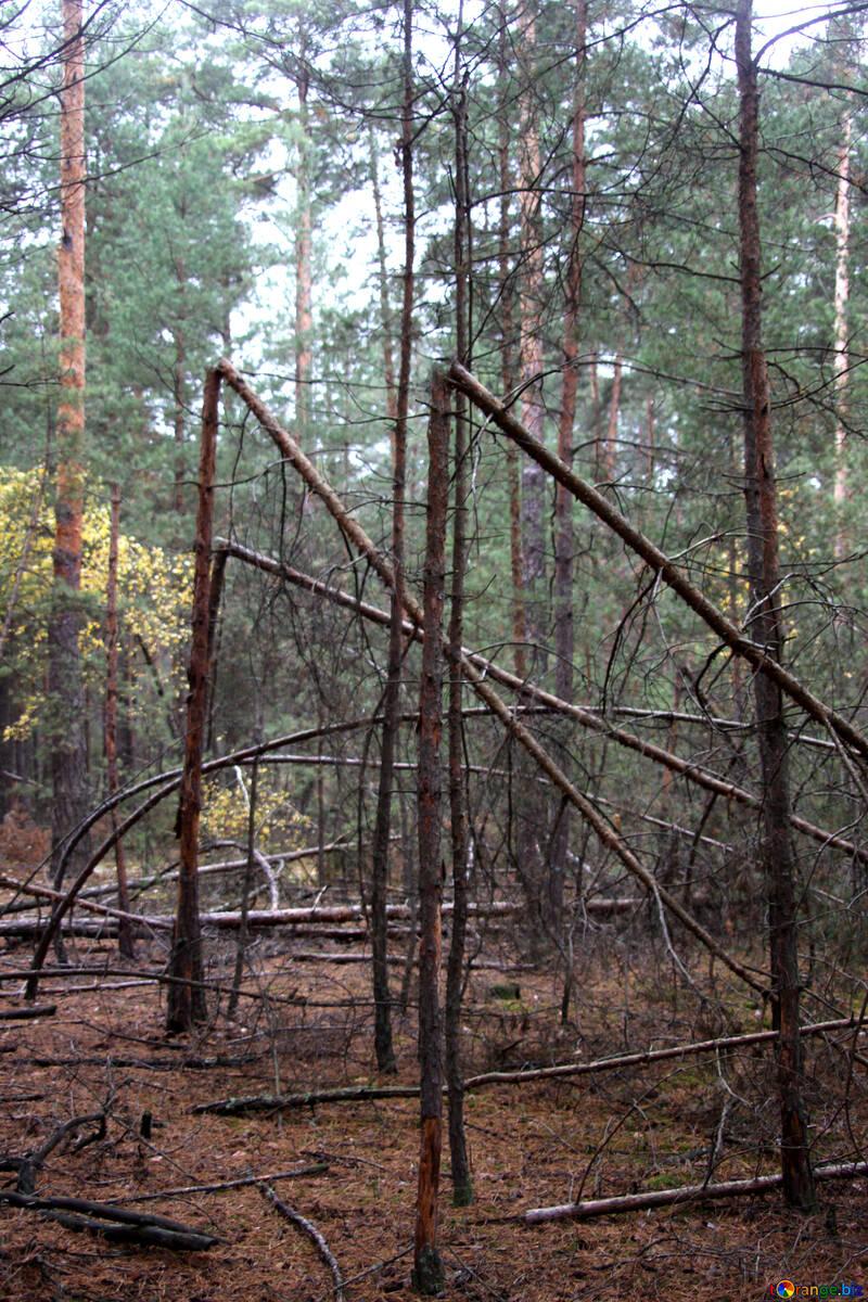 Broken trees №19070