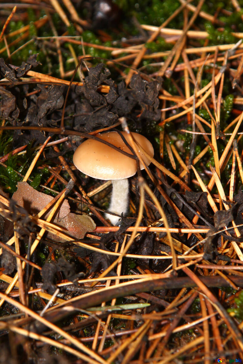Forest is not edible mushroom №19081