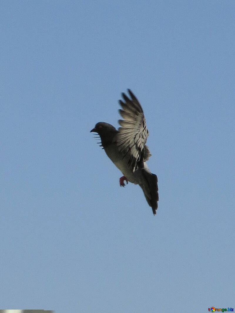 A bird in the air brakes №19806