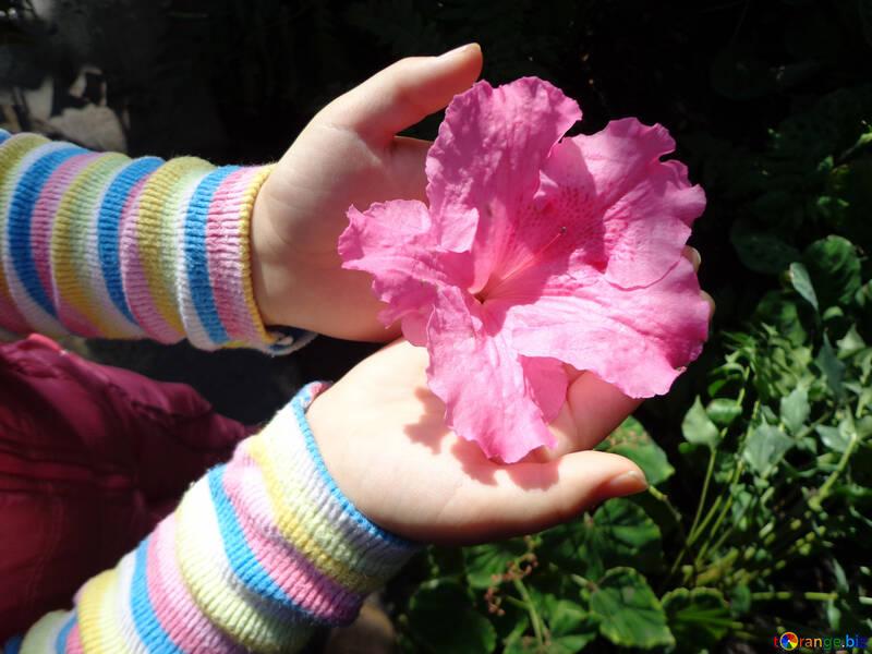 Цветок в детских руках №19432