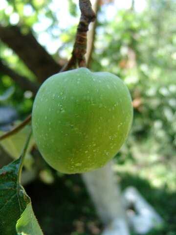 Green  apple №2412