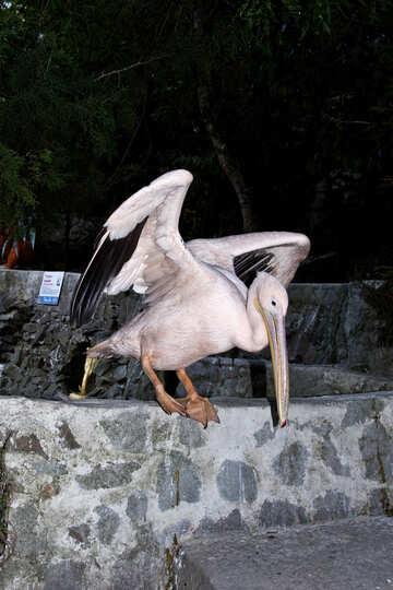 Pelican Pink  №2907