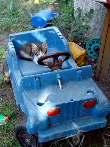 Gattino in una macchina del bambino №2780