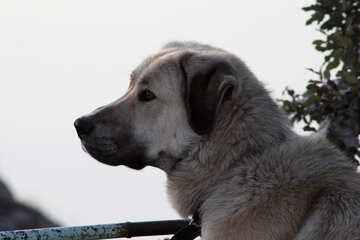 Dog with sad eyes №2259