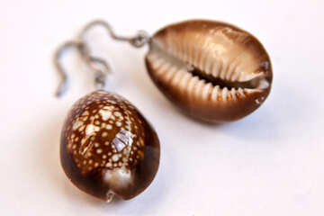 Women`s earrings made of shells. №2070