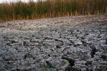 dry bottom of the lake  №2716