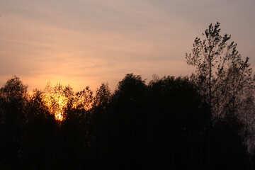 sera, nella foresta  №2705