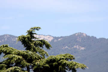 The top of pine tree in the background of mountains №2180