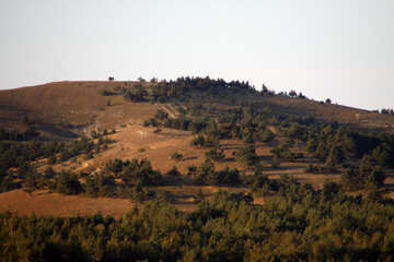 Plateau. Pines №2341