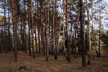 Mixed forest №2153