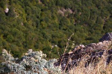 Alpine herbs №2308