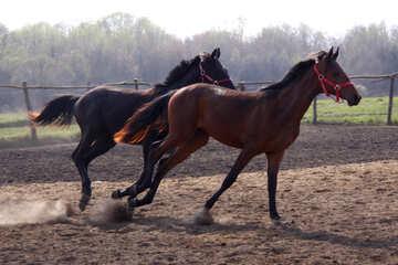 Horse family  №2548