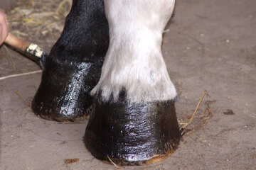 Care of hoofs №2853