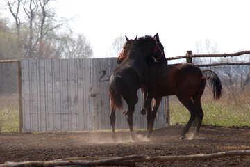 Stallion climbs mare  №2552